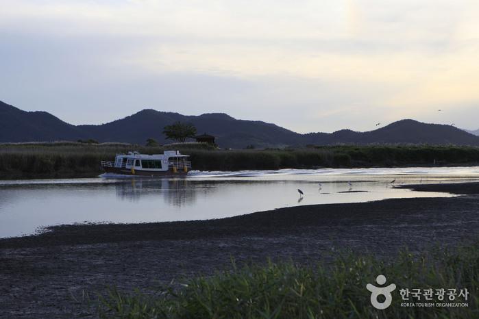 Suncheonman Bay Wetland Reserve (순천만습지 (구, 순천만자연생태공원))