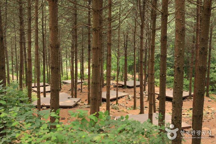 국립 산음자연휴양림