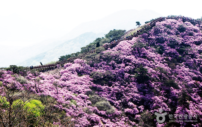 Goryeosan Mountain (고려산)