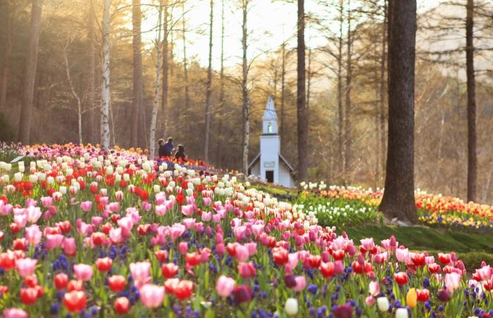 アチムゴヨ樹木園 春のお出かけ 春花祭り(아침고요수목원 봄나들이 봄꽃축제)