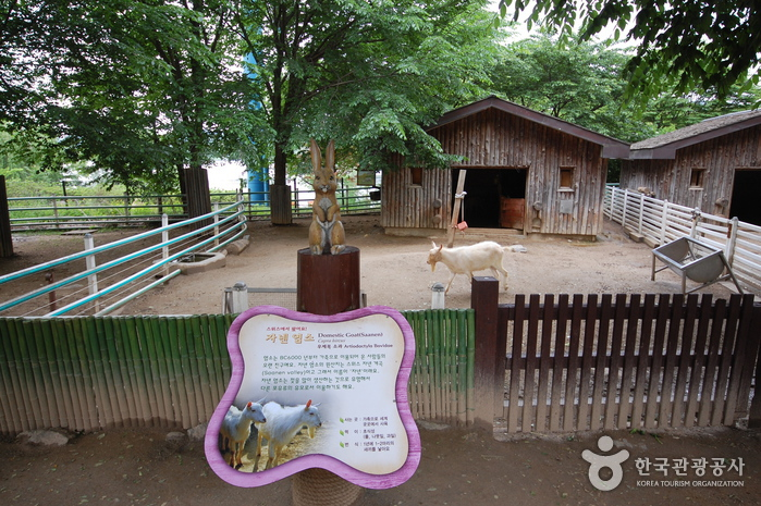 Seoul Zoo in Seoul Grand Park (서울대공원 어린이동물원)