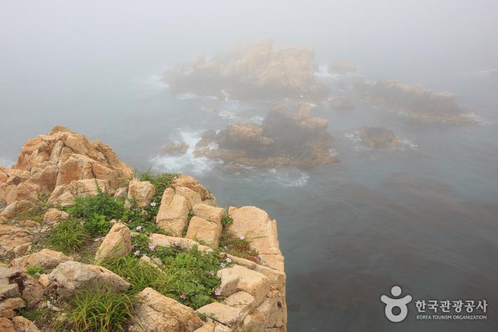 Парк Тэванам (대왕암공원)29