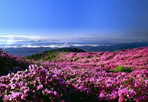 Hwangmaesan County Park (황매산 군립공원)