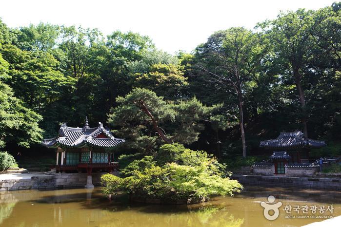 창덕궁 후원의 첫 번째 중심 정원, 부용지와 부용정. 휴식과 교육을 위한 장소였다