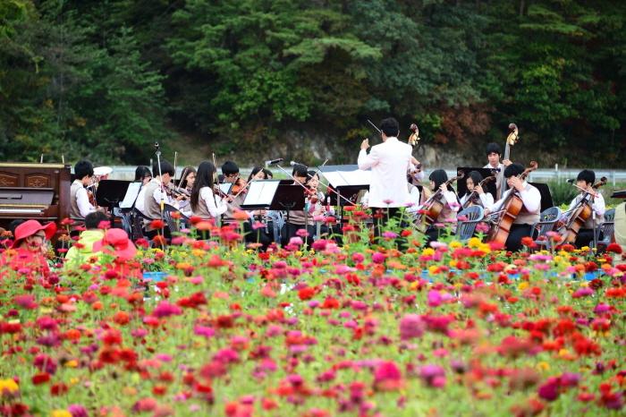 평창백일홍축제 2016 사진