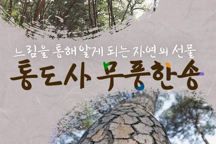 [여행 카드] 느림을 통해 알게 되는 자연의 선물, 통도사 무풍한송