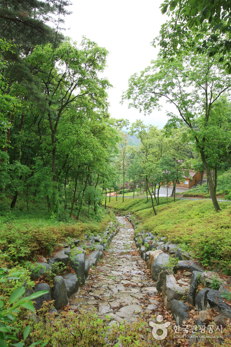 Songjeong Natural Recreation Forest (칠곡 송정자연휴양림)