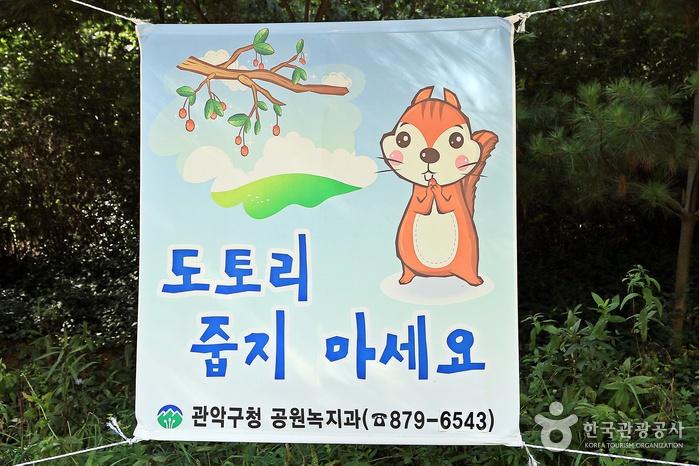 숲 속에 걸린 플랜카드-도토리 줍지 마세요. 관악구청 공원녹지과 879-6543