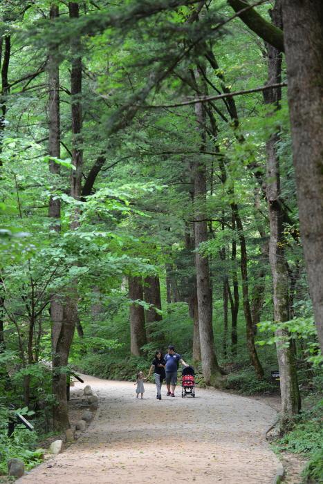 월정사 전나무숲길을 찾은 가족