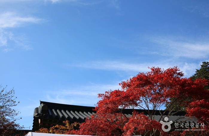 높고 푸른하늘, 빨간단풍, 월정사 기와지붕