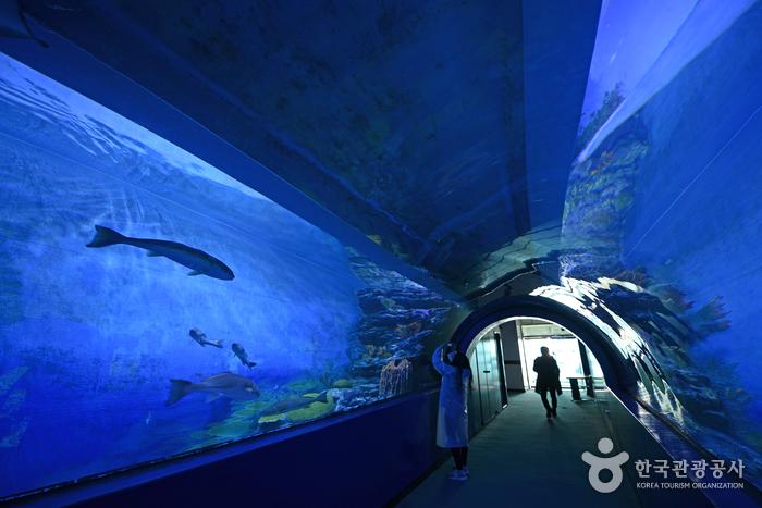 화진포생태박물관
