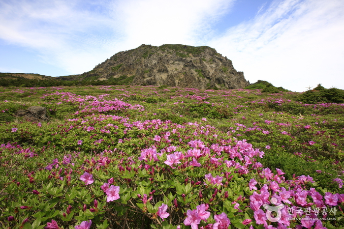 Yeongsil Trail (Hallasan National Park) (한라산 영실)