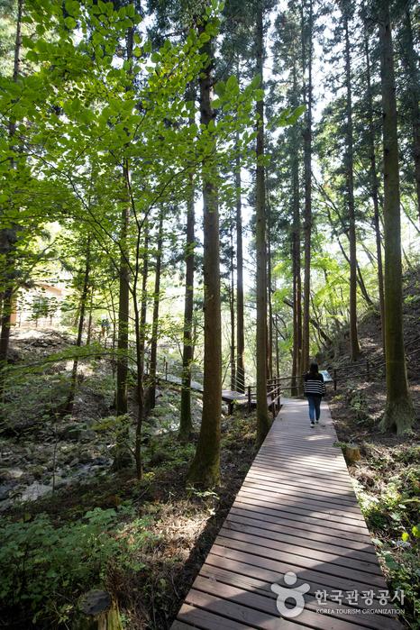 白雲山自然休養林(백운산자연휴양림)