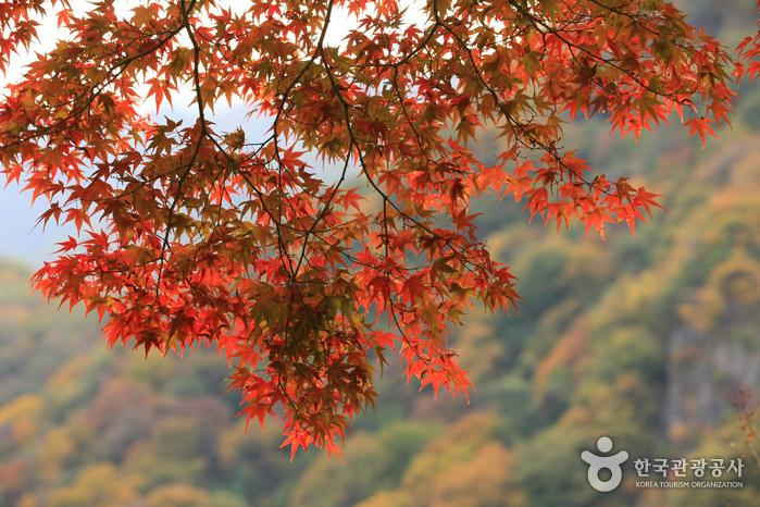 Фестиваль клёна в храме Пэгянса в Чансоне (장성백양단풍축제)
