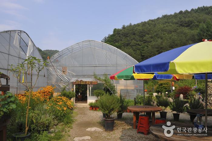 홍천 아로마 허브동산
