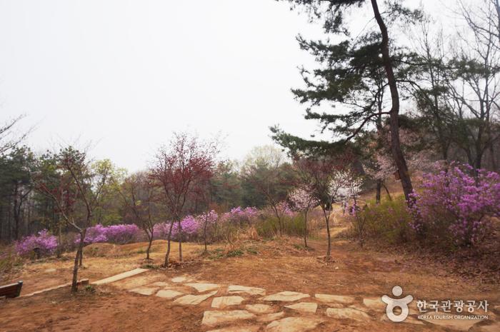 심학산 산림공원