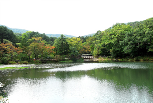 Korea National Arboretum and Forest Museum (국립수목원)