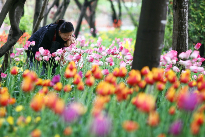 한택식물원 봄꽃페스티벌 2017