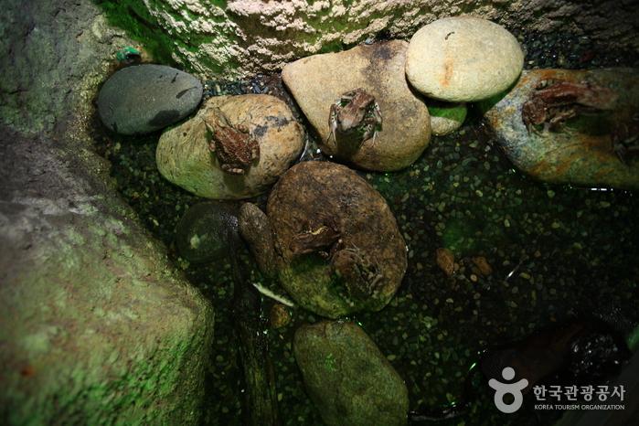 민물고기생태체험관 사진9