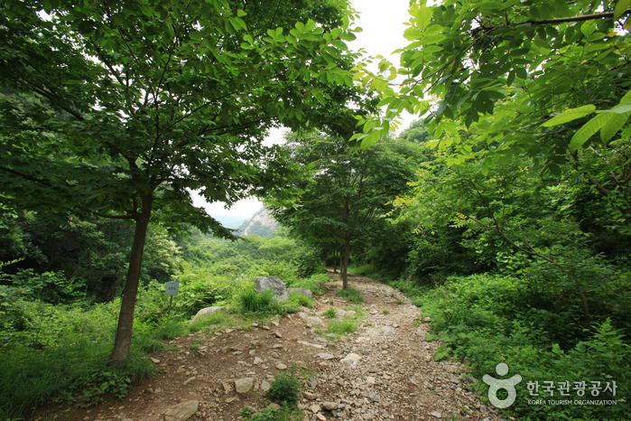 Yongmunsan Wild Herb...
