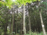 서귀포자연휴양림