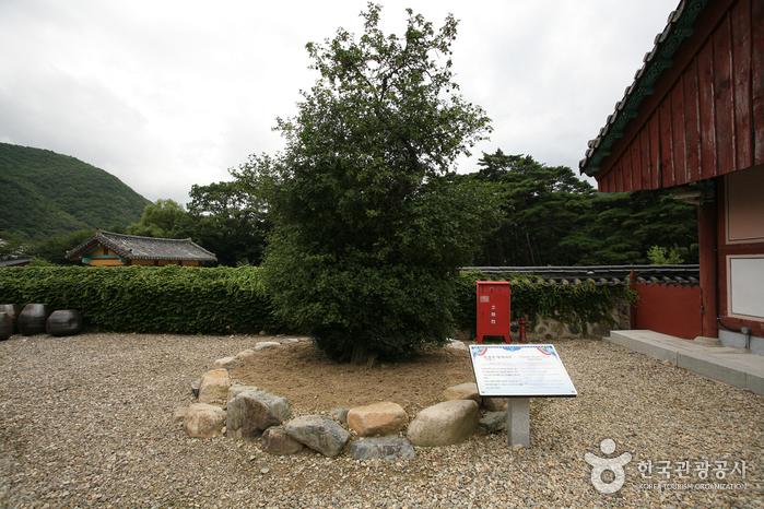 Bogyungsa Temple (보경사)
