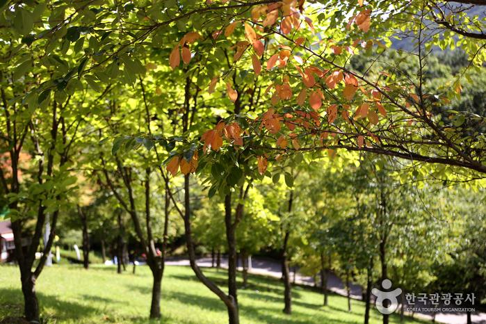 가을빛으로 물들기 시작한 공원의 나무들