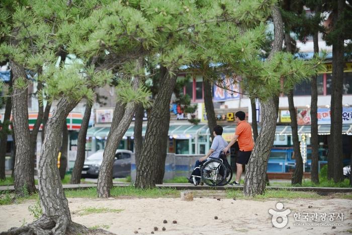올림픽 도시, 평창강릉으로 떠나는 향기로운 여행 사진