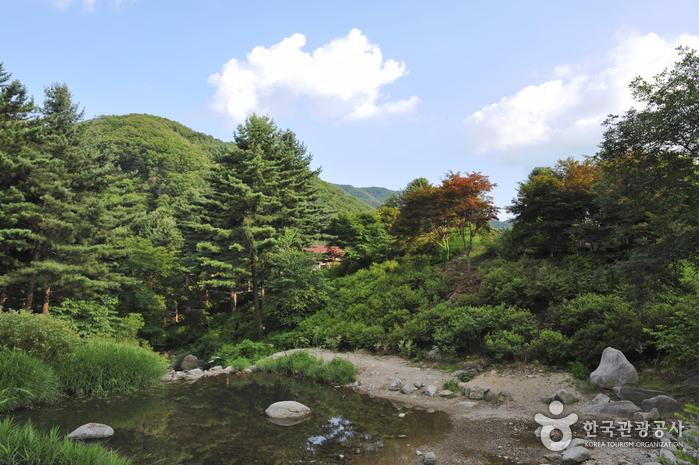 아침고요수목원 사진68