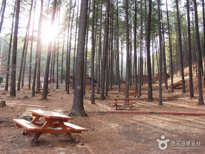 Erholungswald Baegunsan (백운산자연휴양림)