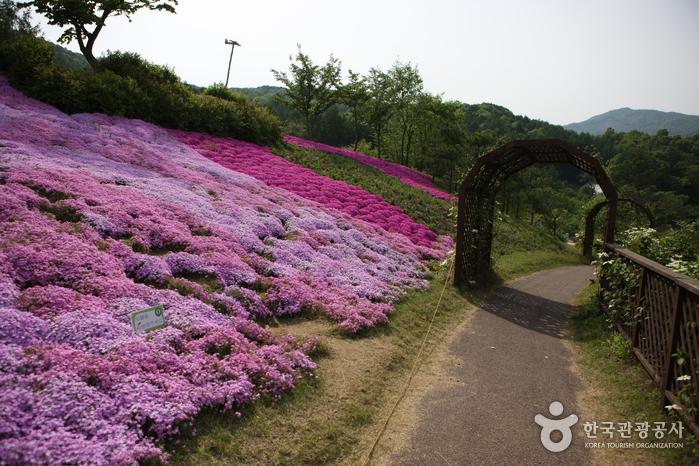 Jardin botanique Haeyeorim (해여림식물원)