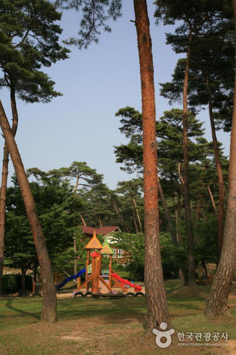Anmyeondo Island Recreational Forest (안면도자연휴양림)
