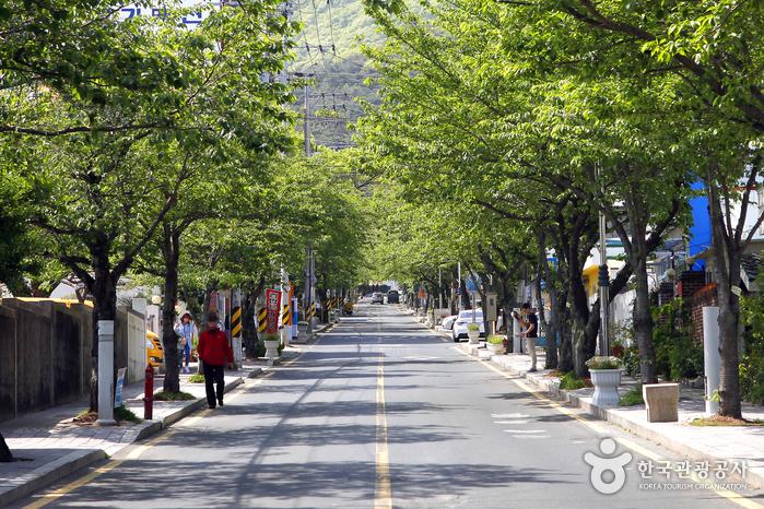 해마다 4월이면 벚꽃으로 꽃 대궐을 이루는 봉평동