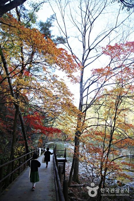 단풍나무로 우거진 산책길을 따라 걷는 두 사람