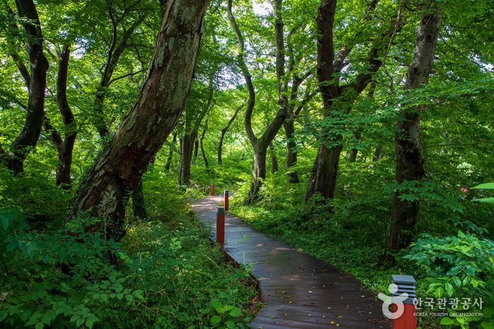 Bosque Bangjoeoburim en Mulgeon-ri de Namhae (남해 물건리 방조어부림)