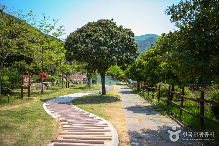 Wando Arboretum (완도수목원)