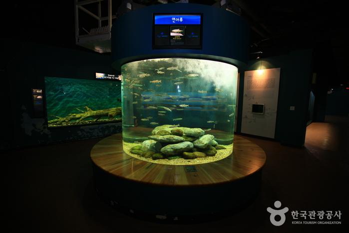 민물고기생태체험관 사진8
