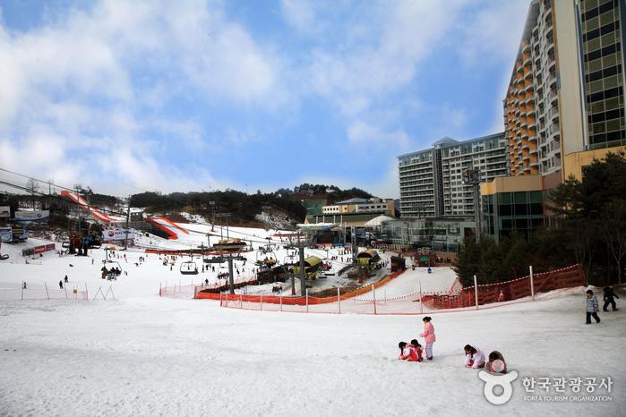 威利希利渡假村滑雪場(웰리힐리파크 스노우파크)
