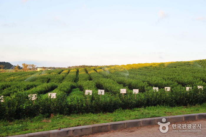 Daheeyeon Garden (다희연)