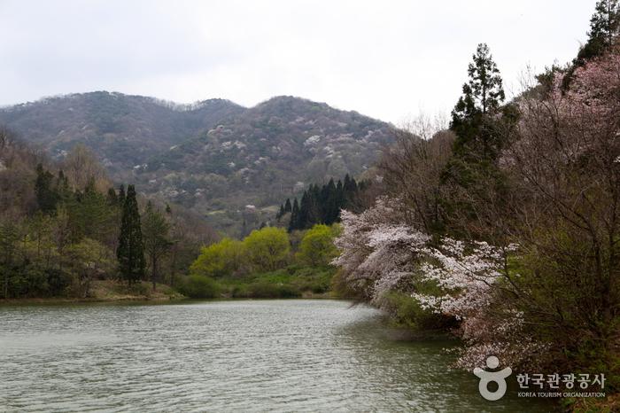 Seryangji Reservoir (세량지)