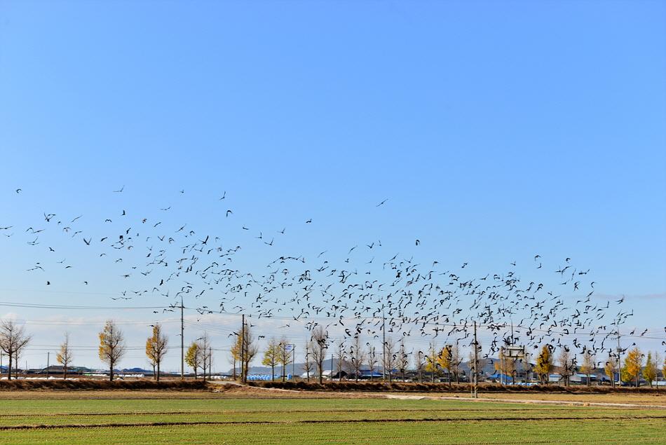 새만금들판. 새들이 날아가고 있다.