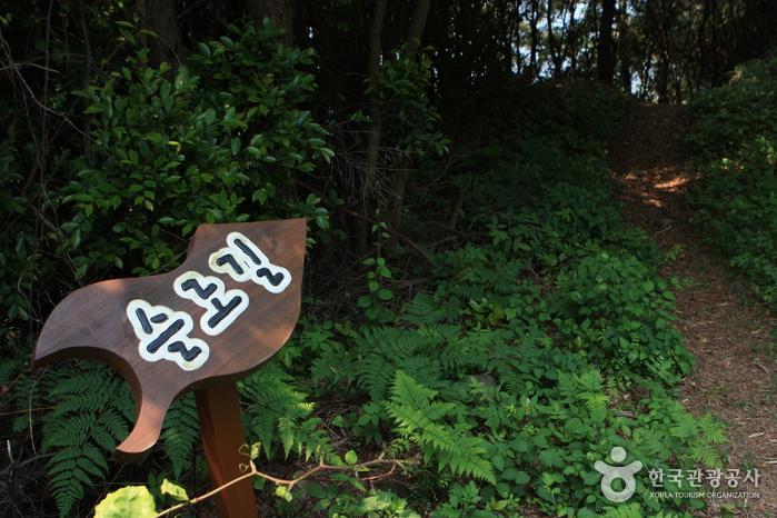 青山島スローウォーク祭り(청산도 슬로걷기 축제)