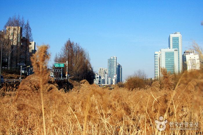 良才川生態公園(양재천 생태공원)