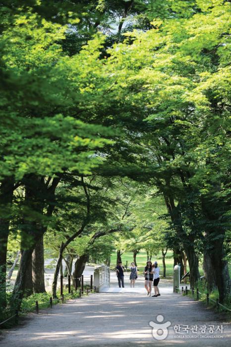 내소사로 향하는 아늑한 숲길