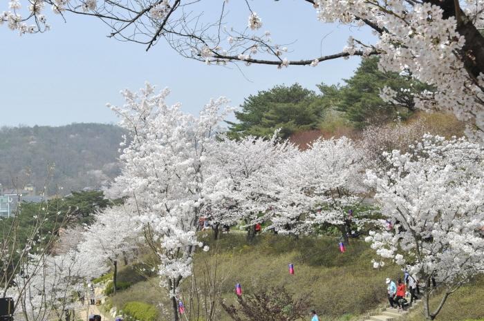 鞍山チャラクキル桜音楽会(안산자락길 벚꽃음악회)