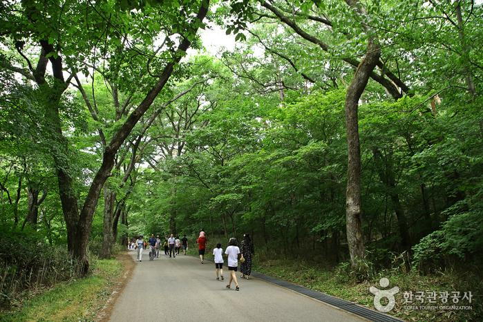 보은 오리숲길의 빛깔은 울창한 초록