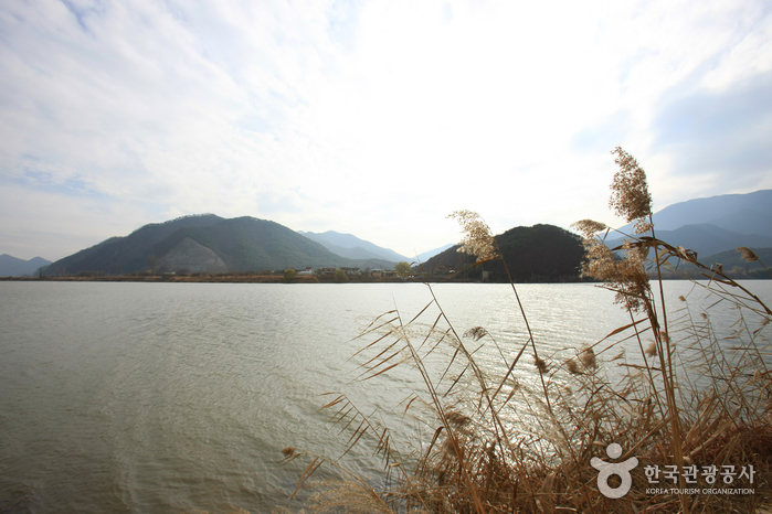 Nakdonggang River (낙동강)