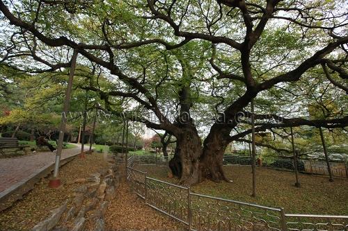 Parc Suyeong Sajeok (수영사적공원)