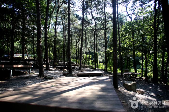 시원한 소나무 숲 아래 자리한 캠핑 사이트