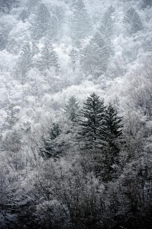 폭설이 내린 오대산은 고요하다. 눈은 소리를 빨아들이고, 색을 지워버린다